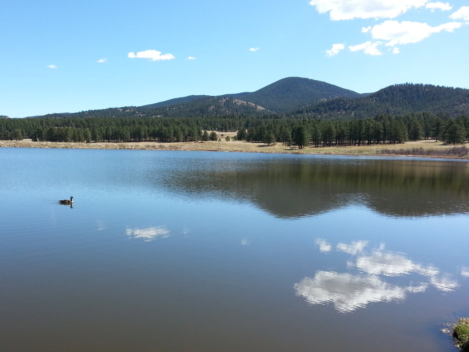 A view of Manitou Lake and a goose.