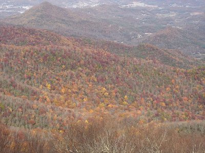 Trees changing colors in the Georgia mountains.